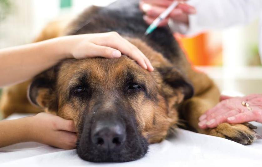 a kutya hipertóniájának tünetei)